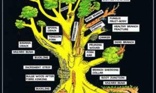 """Alternanza s/l – """"Identificazione specie arboree di pertinenza della scuola e specie arboree di Villa Sciarra"""""""
