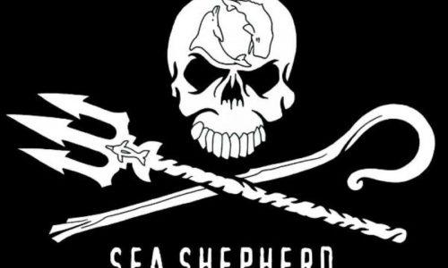 Incontro progetto Sea Shepherd – 20 dicembre